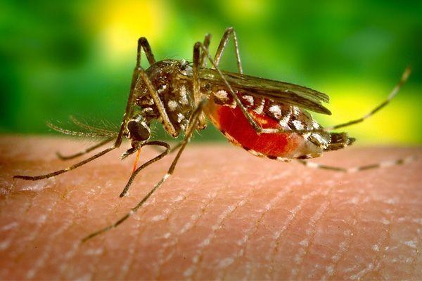 Що таке вірус зика і наскільки він небезпечний?