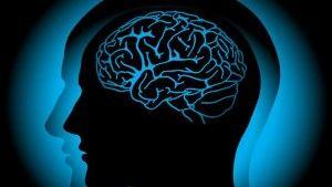 Еволюція головного мозку людини