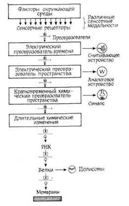 Роботи по дослідженню динаміки синтезу рнк у процесах навчання і зберігання придбаного навику