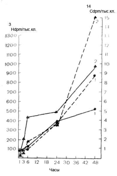 Радикальна зі полімеризація 14с-акриламіду з компонентами клітин і включення 3н-тимідину в культурі щурячих фібробластів при аденовірусної інфекції